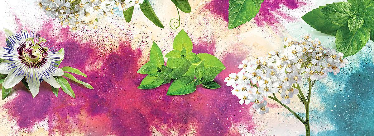 100% natrliche Wirkstoffe – pflanzliche Arzneimittel fr Ihre ...